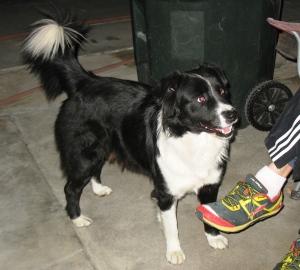 B&W Dog